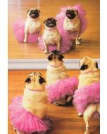 Birthday Card - Ballerina Pugs