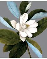 Greeting Card - Magnolia