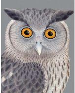 Greeting Card - Dusky Eagle Owl