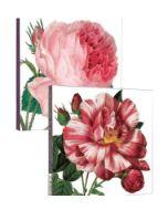 Notecard Wallet - Cabbage Rose & Rose Mundi