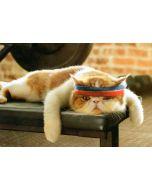 BIRTHDAY - Gym Cat