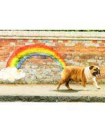 Birthday Card - Rainbow Dog