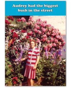 Audery's bush