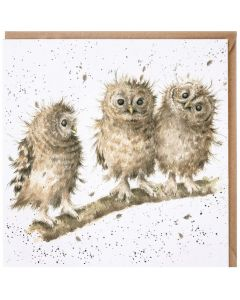 Greeting Card - Owlets