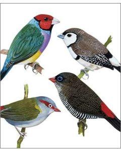 Australian Estrildid Finches - Natural History Museum Card