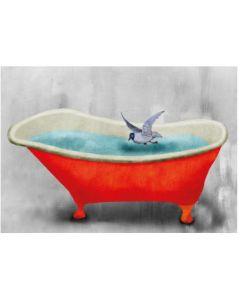Bird & red bath