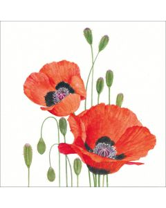 Cocktail Napkins - Poppies (Pack of 20)