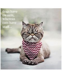 'Cats have staff' Greeting Card