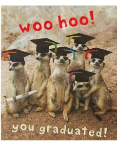 Graduation - Meerkats with graduation hats