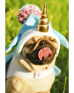 Birthday Card - Unicorn Pug
