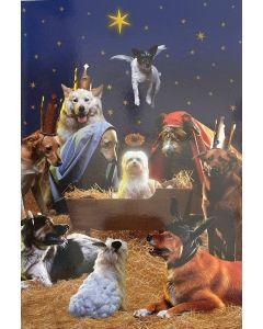 Christmas card - Dog Nativity