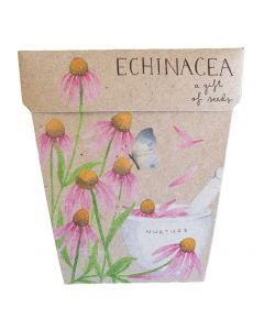 Echinacea - Card & Gift of Seeds