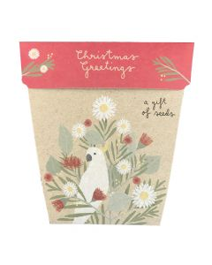 Chistmas Daisy - card & gift of seeds
